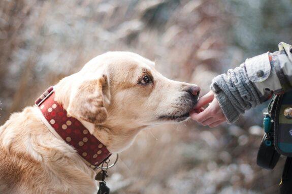 Tips om jouw huisdier jong en gezond te houden